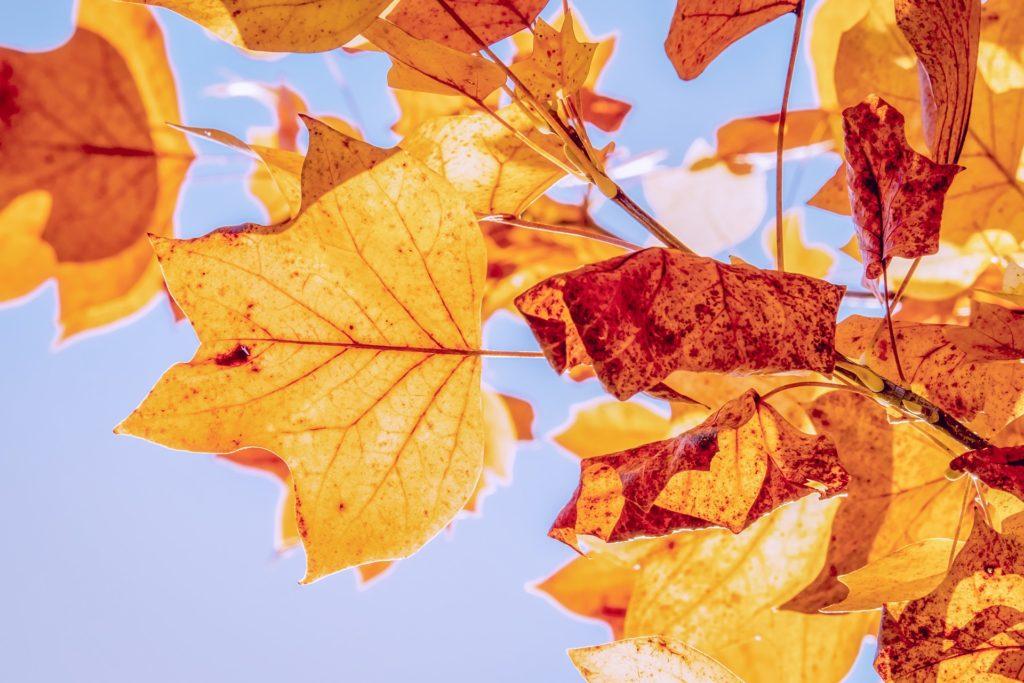 Efterårsblade